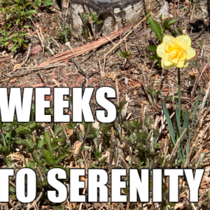 6 Weeks to Serenity