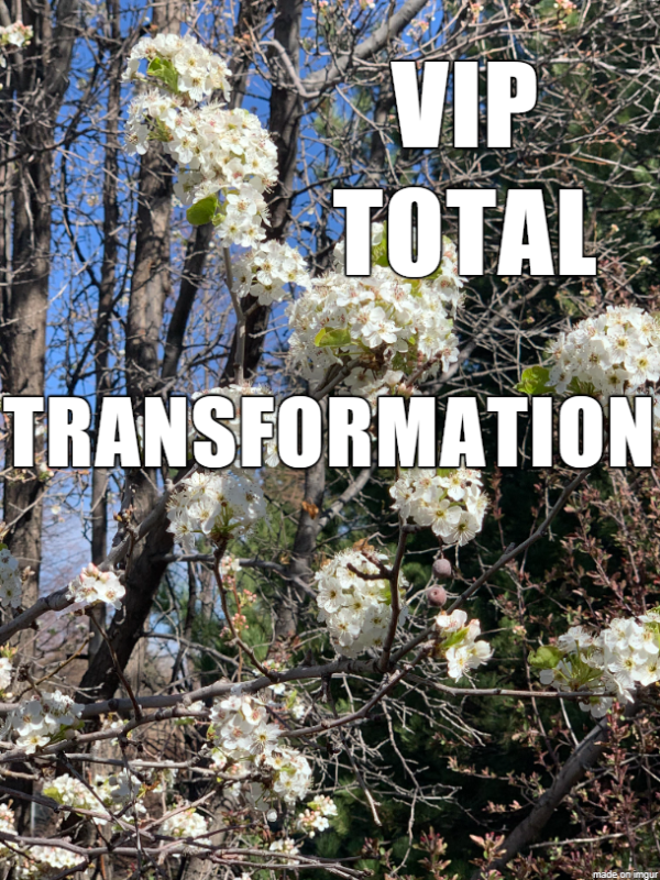 VIP Total Transformation